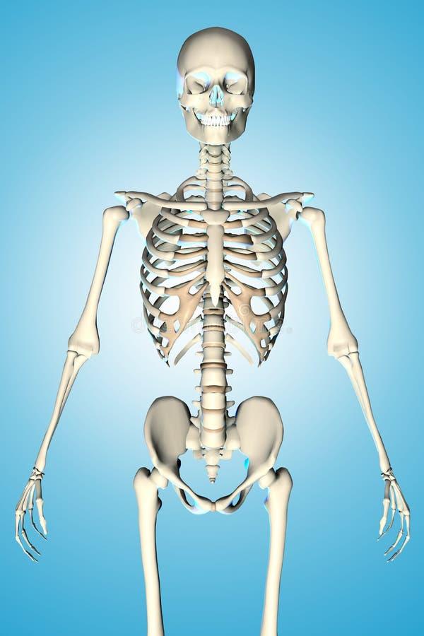 3d rindió el ejemplo de un esqueleto masculino stock de ilustración