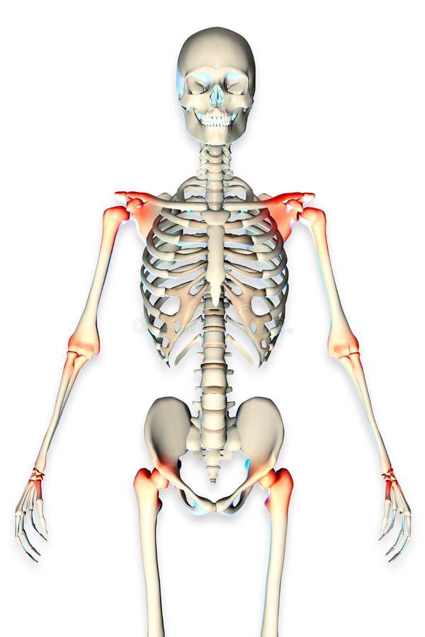 3d rindió el ejemplo de un esqueleto masculino libre illustration