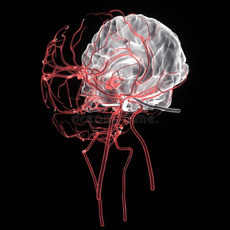 3d rindió el ejemplo médicamente exacto de la anatomía del cerebro stock de ilustración