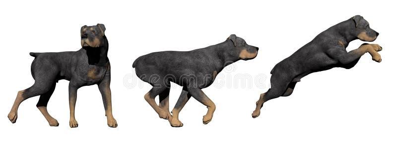 3D Rottweilerhond - geef terug stock illustratie