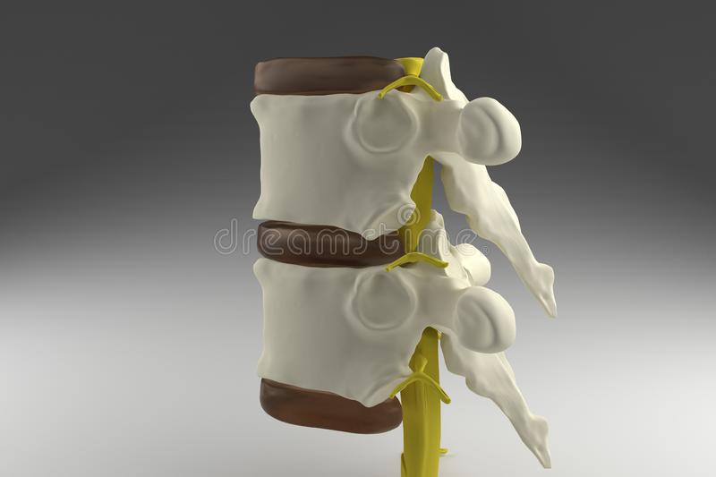 3d spinal cord royalty free illustration