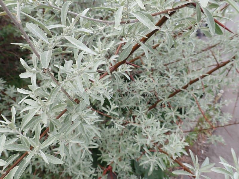 D?tail de texture verte de feuilles de ressort photo stock