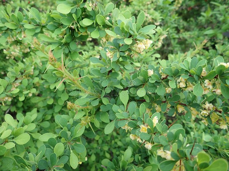 D?tail de texture verte de feuilles de ressort photographie stock libre de droits