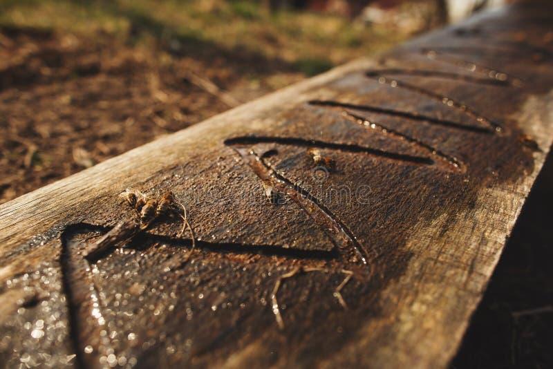 D?tails de fin de l'apiculture  Les abeilles boivent l'eau d'un conseil en bois images libres de droits