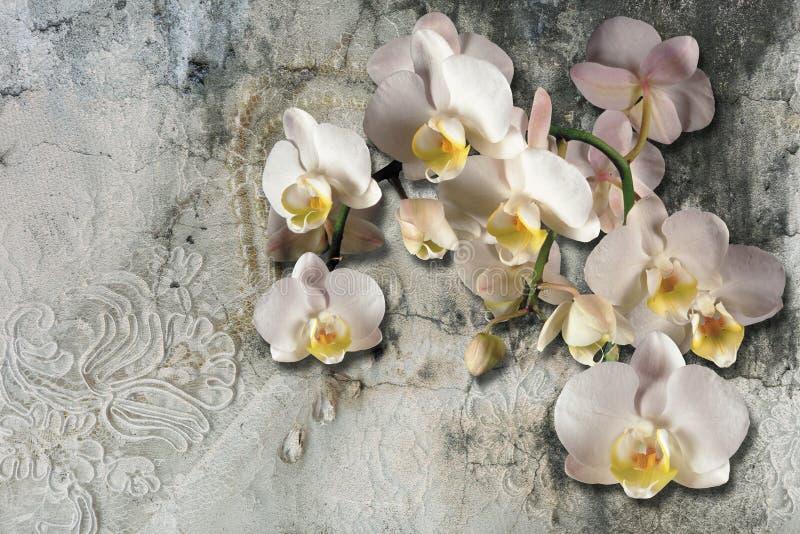 3d tapeta, bukiet orchidee na koronce i betonowa ściana textured, Malowid?o ?cienne skutek ilustracji