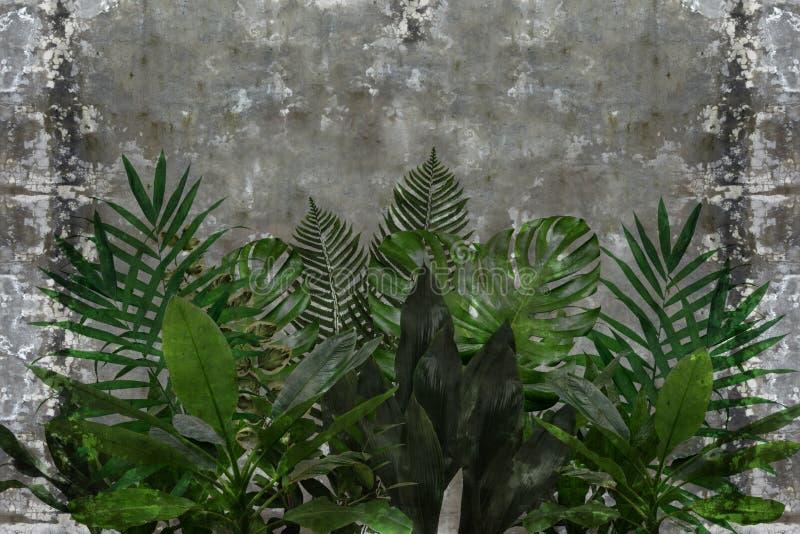 3d tapeta, liście houseplants na betonowej ścianie textured tło obrazy stock