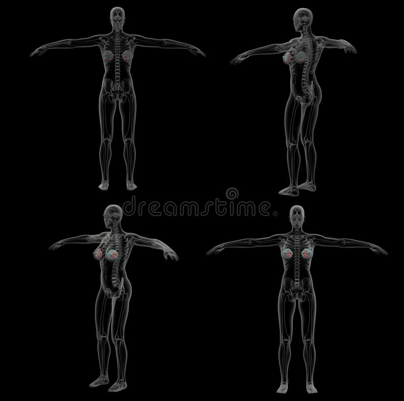 3d teruggevende illustratie van de menselijke borstklier royalty-vrije illustratie