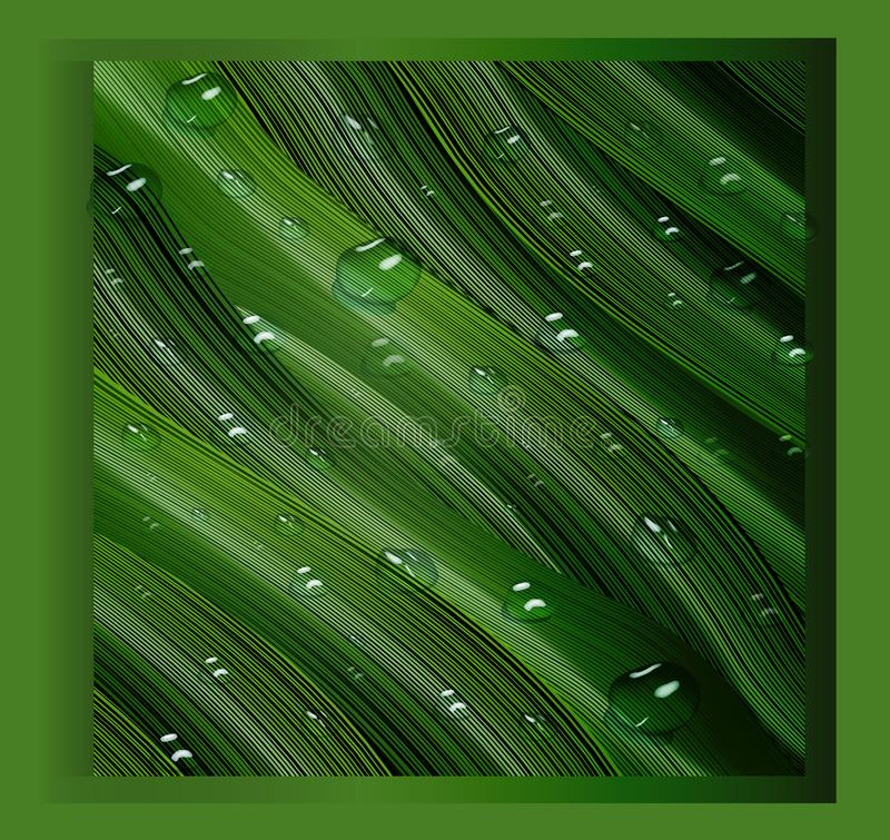 3d, three-dimensional water drops and three-dimensional, green leaves in the style of realism. a realistic background , three-. Realistic 3D water drops on green royalty free illustration