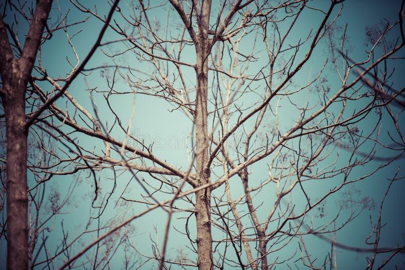 D?tt tr?d och bl? himmel i den stora skogen arkivfoto