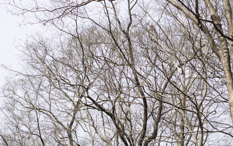 D?tt tr?d p? en vit bakgrund fotografering för bildbyråer