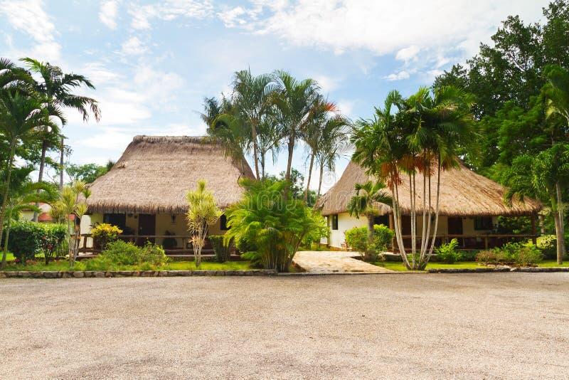 Download Dżungli Meksykanina Sceneria Obraz Stock - Obraz: 21814459