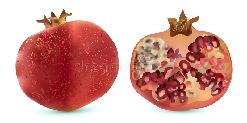 3d vector realistic pomegranate, tropical fruit set, isolated on white background. Set ripe pomegranate. Red ruby. 3d vector realistic pomegranate, tropical stock illustration