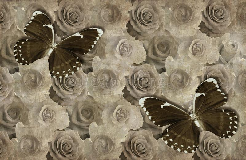 3d wallpaper, roses and butterflies, old paper background texture stock photo