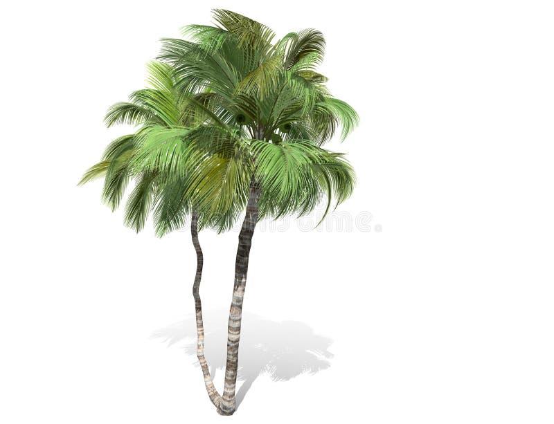 3D Wiedergabe - hoher Kokosnussbaum lokalisiert ?ber einem wei?en Hintergrund stock abbildung