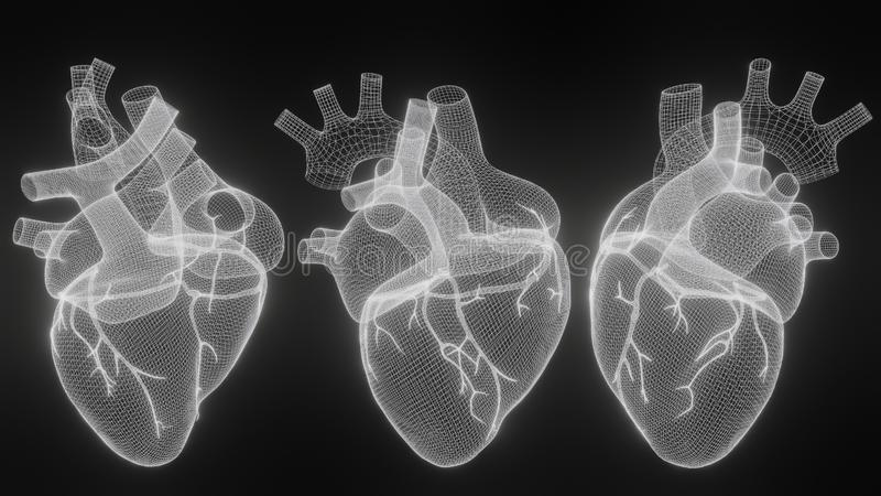 3D wireframe hearts render isolated white backgrounds, Abstract Heart icon form lines and triangles, point connecting network on vector illustration