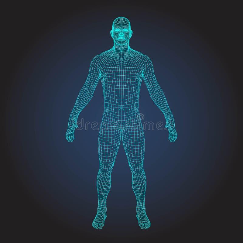 3D wireframe menselijk lichaam vector illustratie