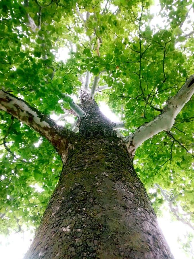 Download 3d Wysokiego Ilustracyjnego Postanowienia Drzewny Tulipanowy Biel Zdjęcie Stock - Obraz złożonej z greenbacks, wysoki: 57656494
