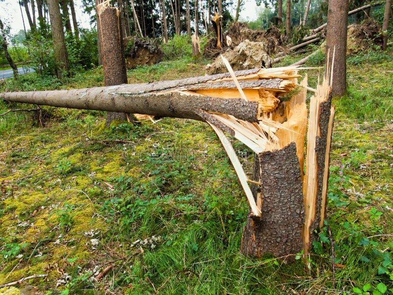 Daño de la tormenta. Árboles en el bosque después de una tormenta. imagenes de archivo