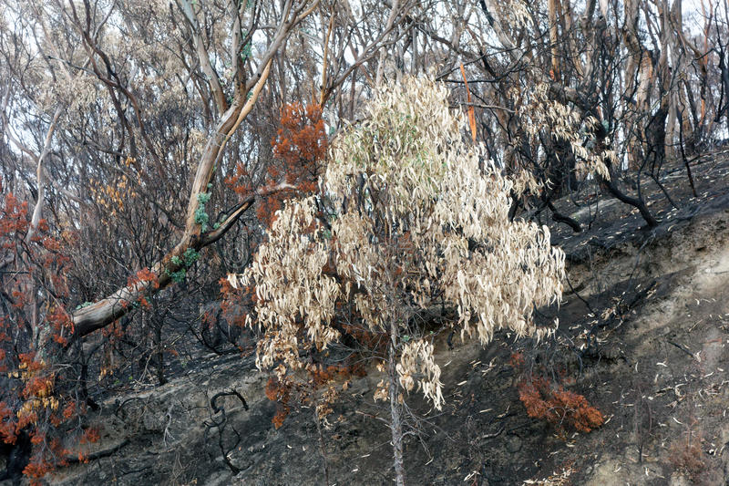 Daño del Bushfire, Australia fotos de archivo