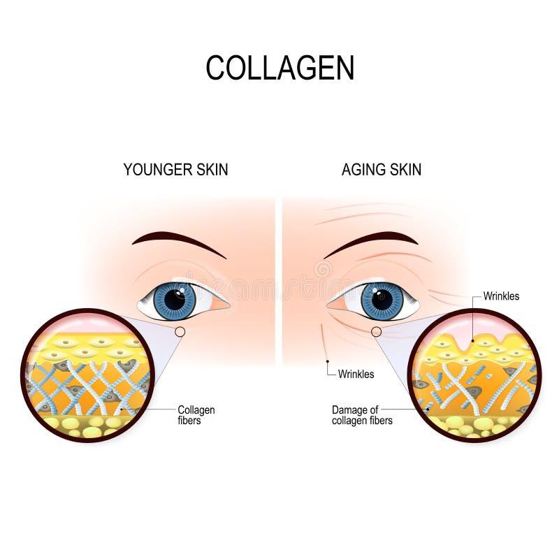 Daño del envejecimiento y del colágeno de la piel libre illustration