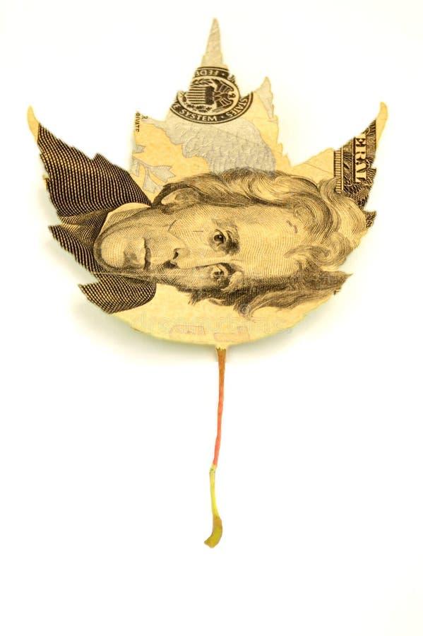 Da árvore do dinheiro fotos de stock