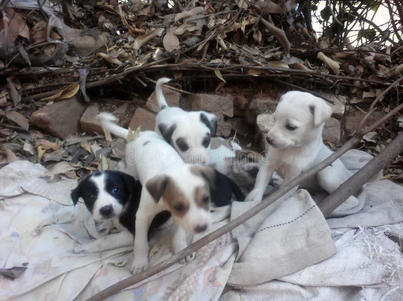 Da família canino bonita dos bebês interativo bonito bonito junto com crianças foto de stock royalty free