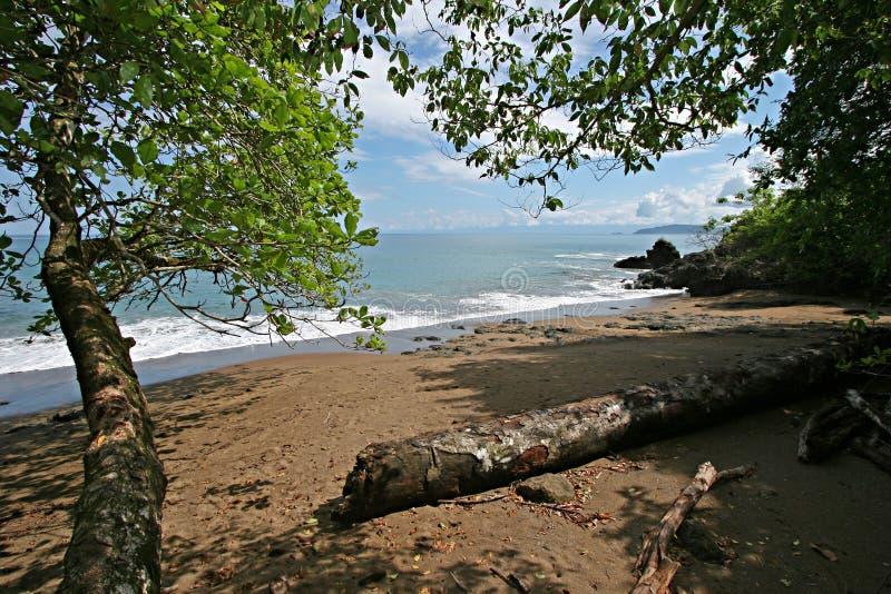 Da floresta à praia fotos de stock