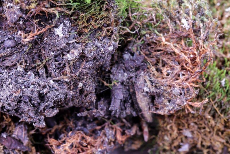 Da floresta macia da textura da natureza da vida da terra do solo do verde de musgo crescimento fresco da folha imagem de stock royalty free