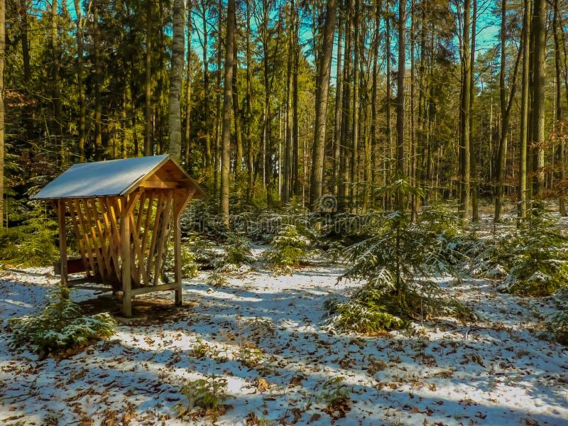 Da floresta vida ainda imagem de stock royalty free