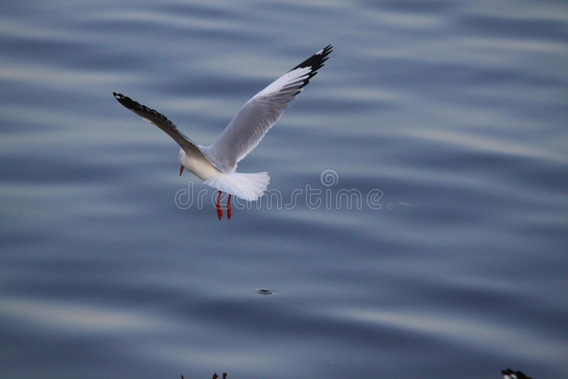 Da gaivota da mosca terra traseira lisa lentamente foto de stock