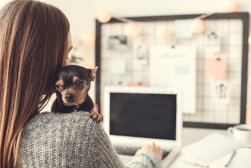 Da jovem mulher do freelancer atmosfera do inverno do conceito do escritório domiciliário dentro que abraça o cachorrinho imagem de stock