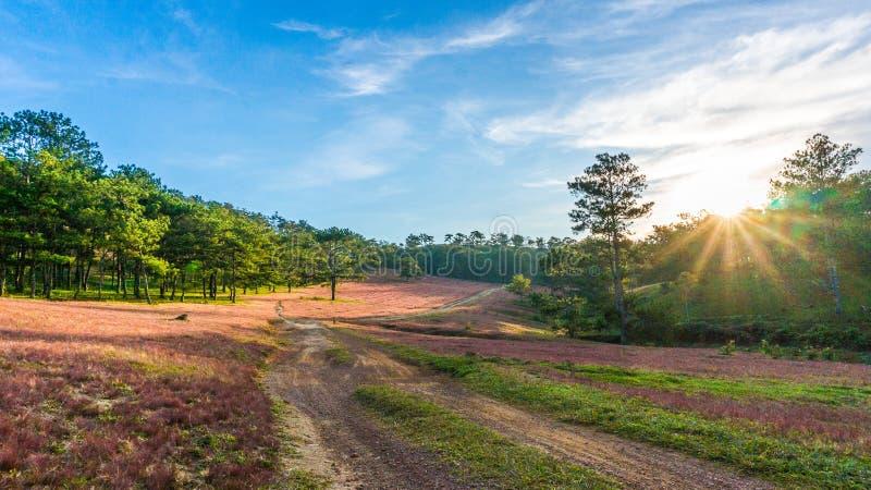 DA lat, lam dong, februari, 2017 van Vietnam 12: Het beautyful landschap van de stad van DA lat, pinkgrass handelt op de pijnboom royalty-vrije stock afbeeldingen