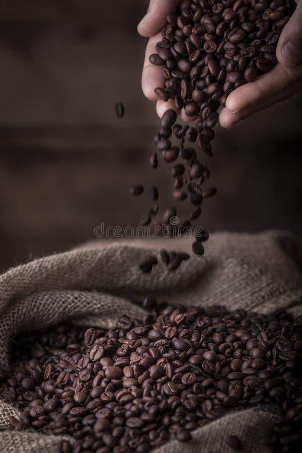 Da los granos de café de colada al saco fotos de archivo