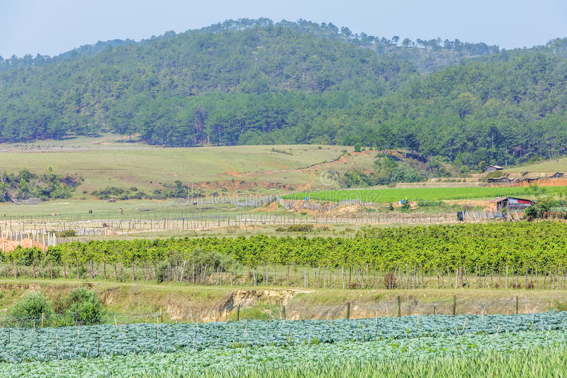 Da Phu hill, Da Lat city, Lam province, Vietnam. Da Phu hill, Da Lat, Lam province, Vietnam. Lam Province is the largest place growing vegetable in Vietnam royalty free stock images