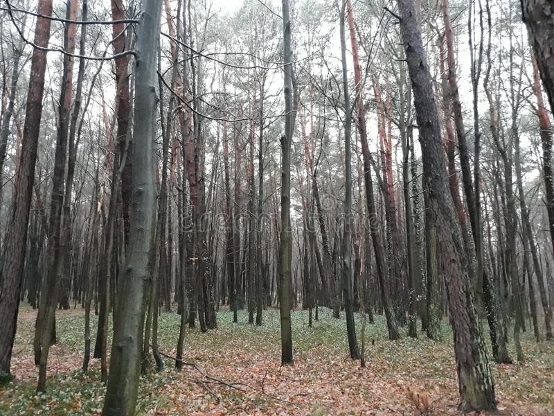 Da qualche parte in Polonia, il parco è una stagione di autunno immagini stock libere da diritti