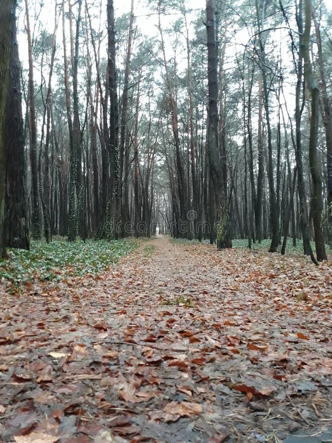 Da qualche parte in Polonia, il parco è una stagione di autunno fotografia stock libera da diritti