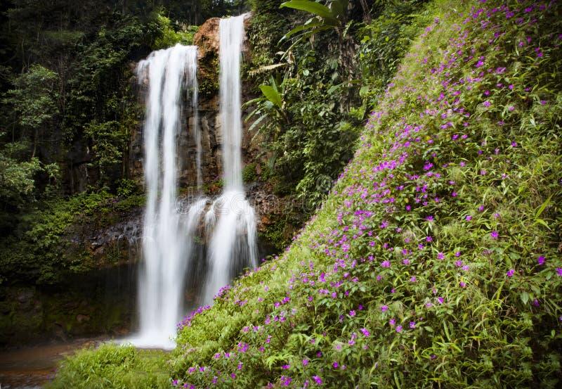 DA Sa Ra Waterfall in Bao Loc, Viet Nam stock foto's
