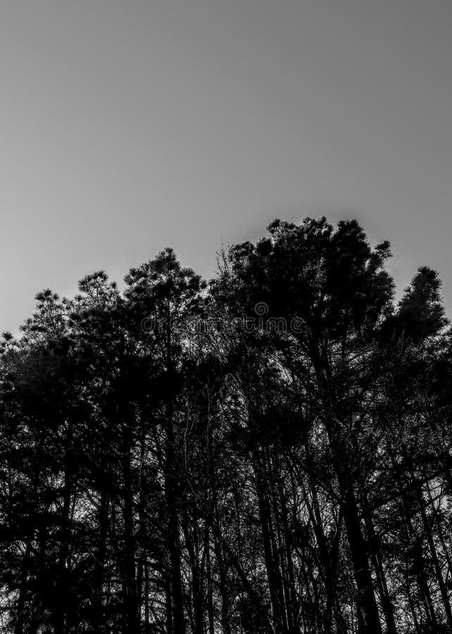 DA-SKÖNHET fotografering för bildbyråer
