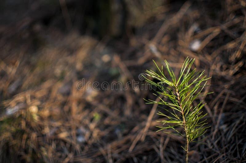 Da solo nella foresta immagine stock libera da diritti