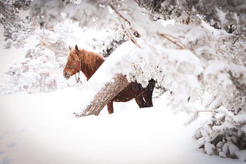Da solo nella neve immagini stock