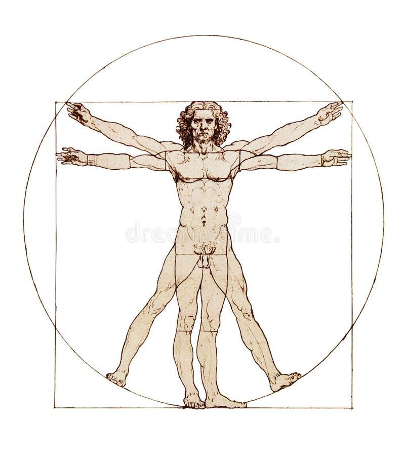Da Vinci's Vitruvian Man. Isolated on white stock photography
