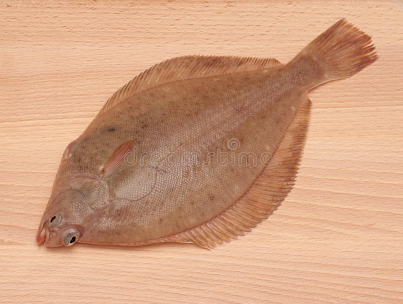 Dab Fish. (Limanda limanda)on Wooden Board Background stock photography