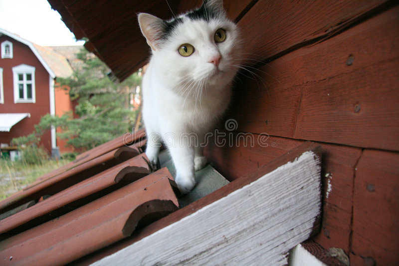 dach kota obrazy royalty free