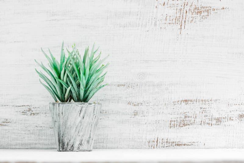 Dachbodenarttopfpflanze auf Regal vor weißer hölzerner Wand des Schmutzes Ansicht mit Kopienraum Büroarbeitsplatz mit einem einge stockbild