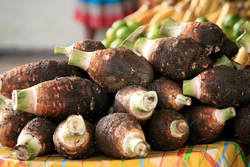 Dachine or Taro, Cayenne Market, French Guiana royalty free stock images