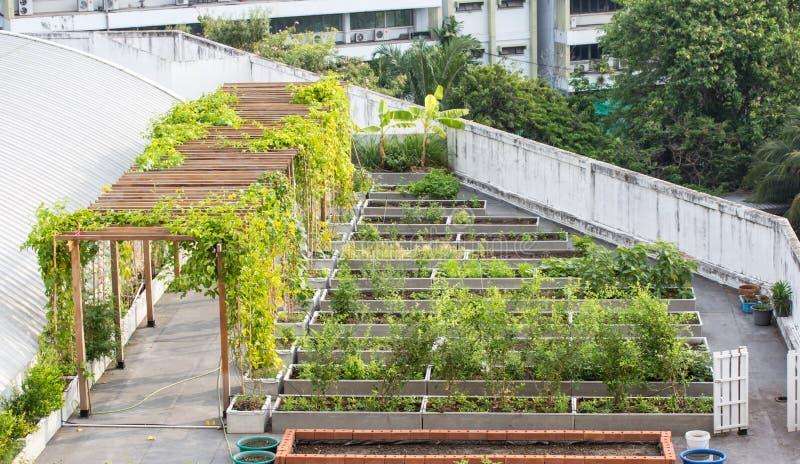 Dachowy ogród na budynku zdjęcie royalty free