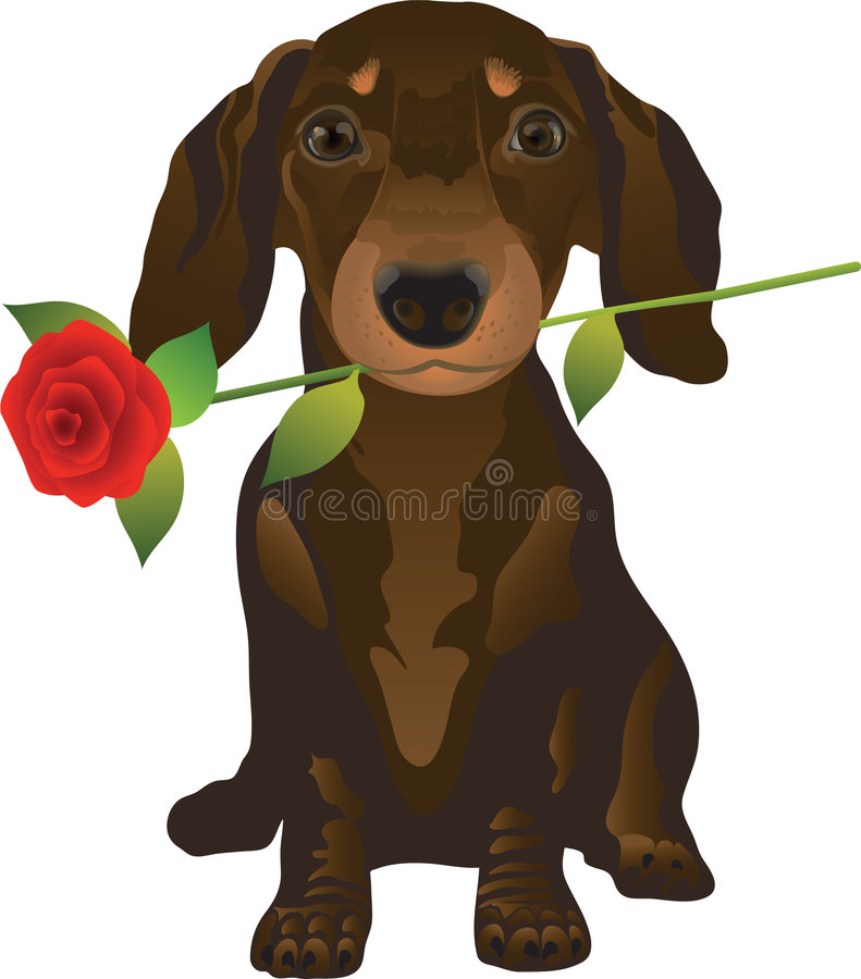 Dachshund stock illustration