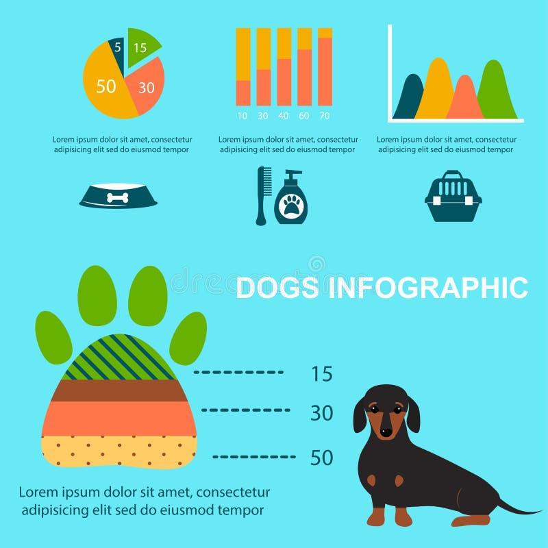 Dachshund dog playing infographic vector elements set flat style symbols puppy domestic animal illustration. Carrying toy pedigree mammal cartoon doggy canine stock illustration