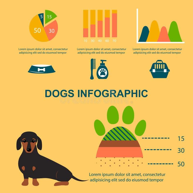 Dachshund dog playing infographic vector elements set flat style symbols puppy domestic animal illustration. Carrying toy pedigree mammal cartoon doggy canine royalty free illustration