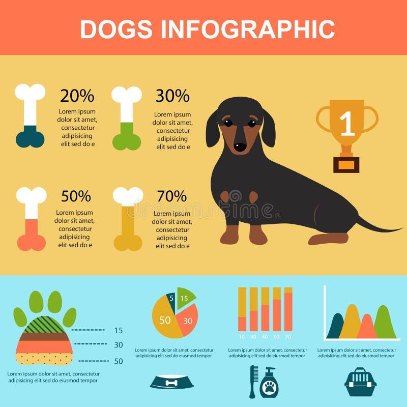 Dachshund dog playing infographic vector presentation symbols set. royalty free illustration
